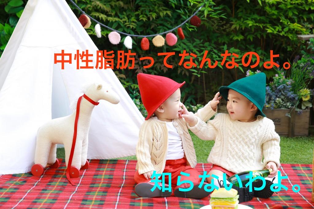 freeimage.9-bb.com-02169