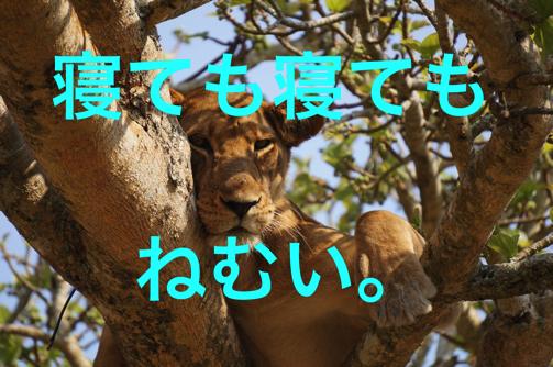lion-690663