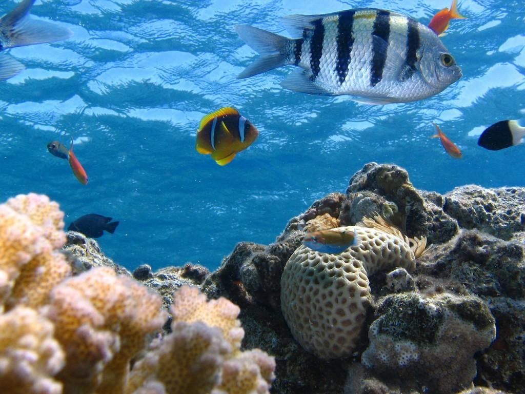 fish-291322_1280