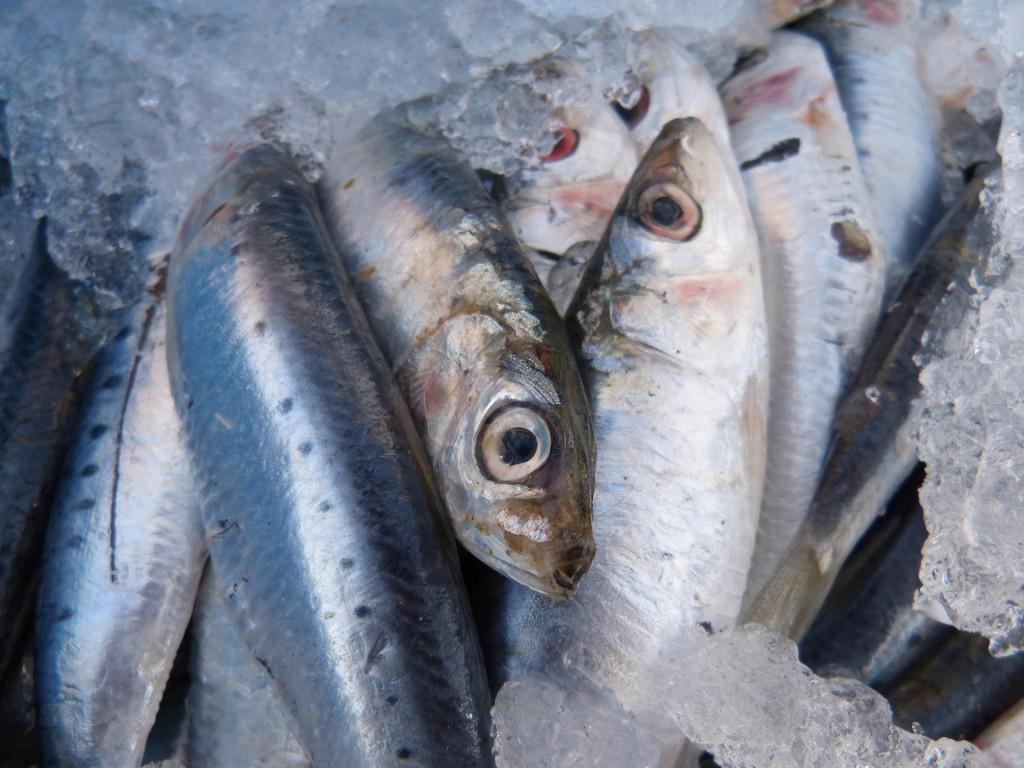 sardines-1106190_1920